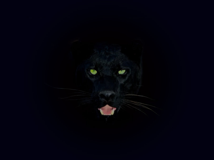 black_panther-by_cazcastalla-green-eyes